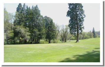 Weed Golf Club - photo 7